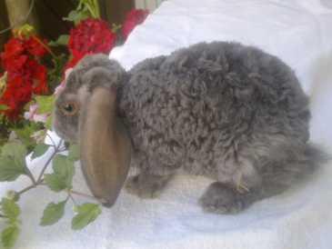 kleinanzeigen suchen kaninchen land kaufen deutschland. Black Bedroom Furniture Sets. Home Design Ideas