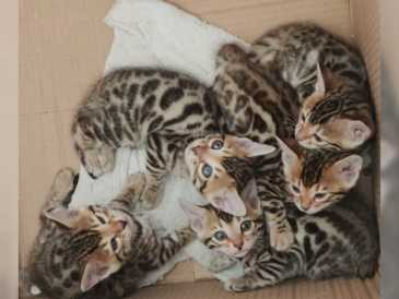 Gratis basel katzen baby Katzen und